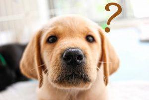 疑問に思う犬